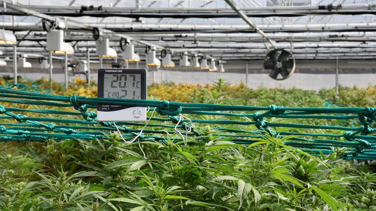 Application-_-Product-in-the-Field-Cannabis-3.jpg