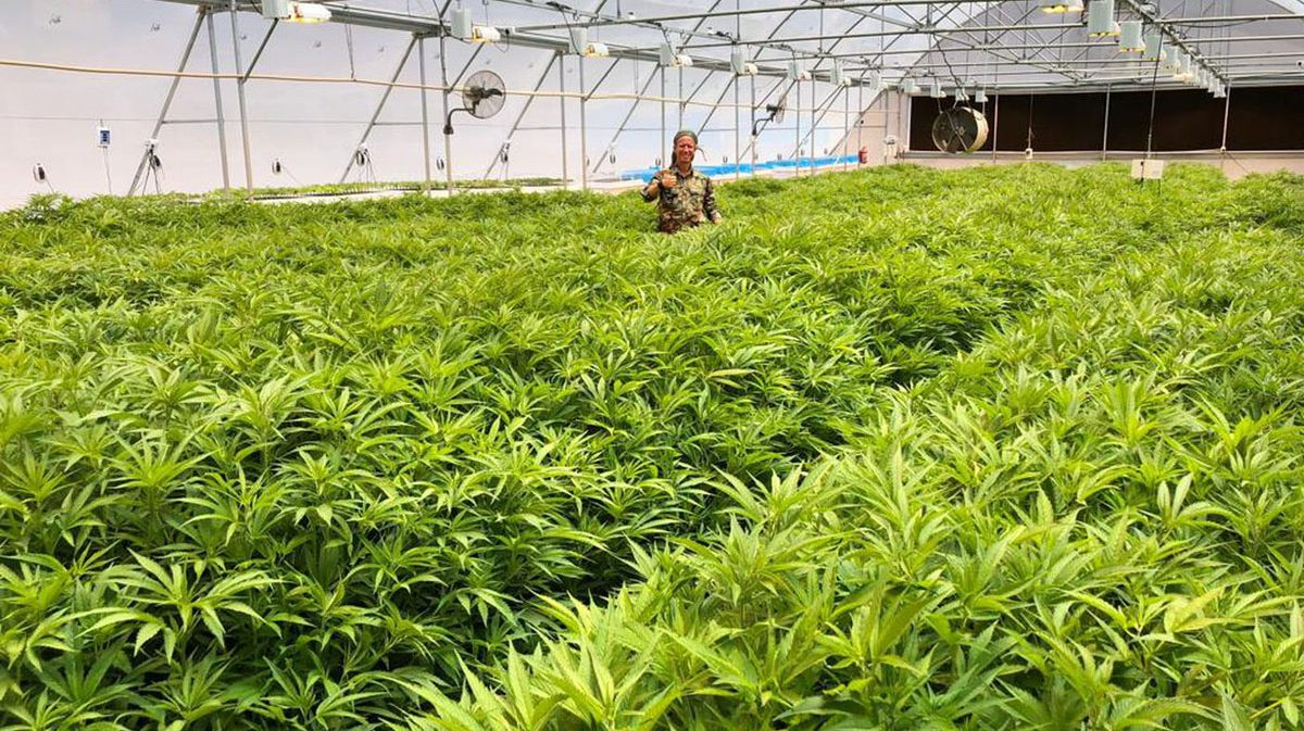 Application-_-Product-in-the-Field-Cannabis-5.jpg