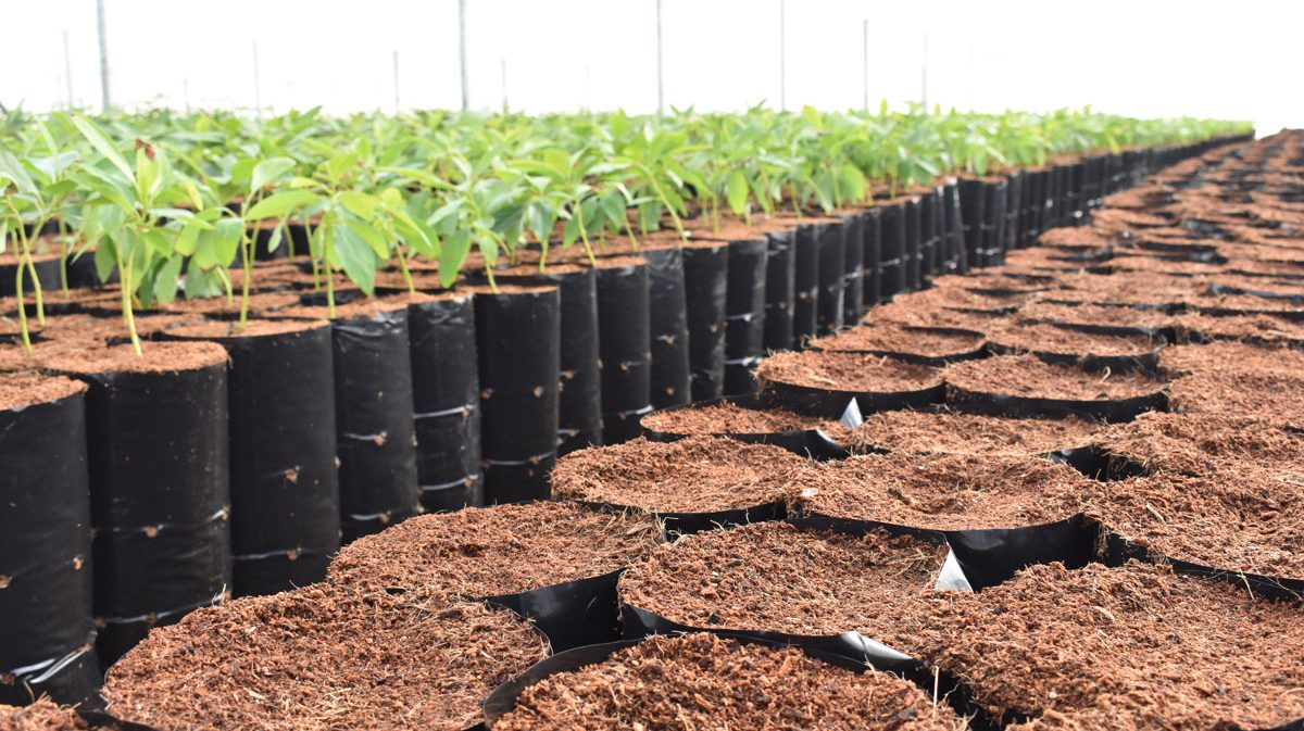 Application-_-Product-in-the-Field-Fruit-Tree-Nursery6.jpg