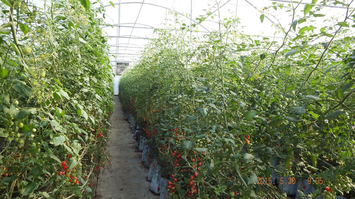Application-_-Product-in-the-Field-Vegetables-5.jpg