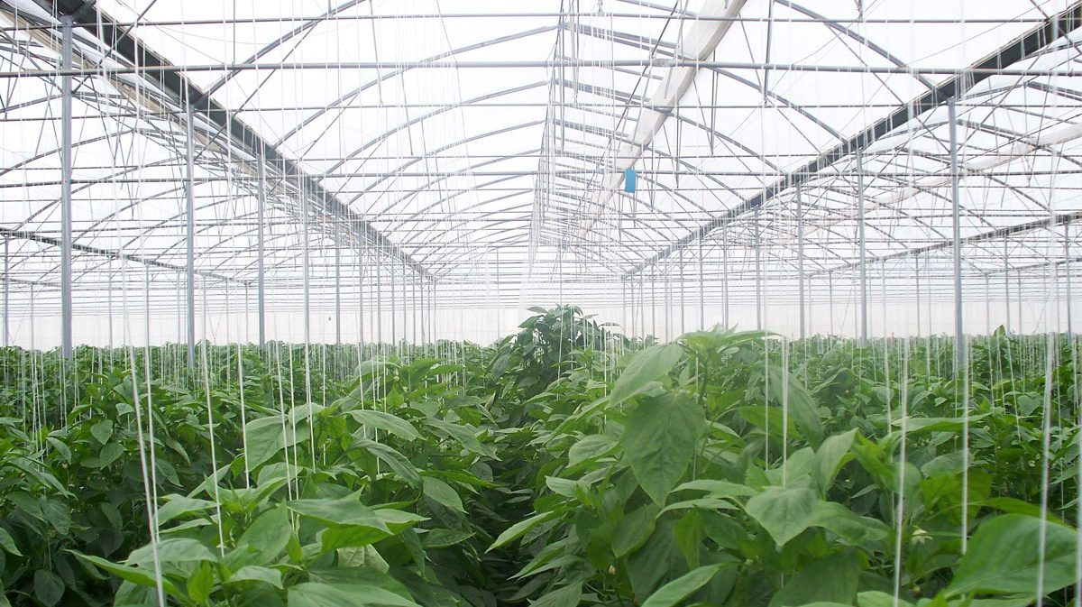 Application-_-Product-in-the-Field-Vegetables-6.jpg